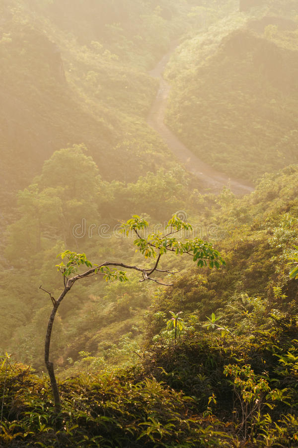 Mar do ponto de opinião da névoa de Krungshing da névoa fotografia de stock