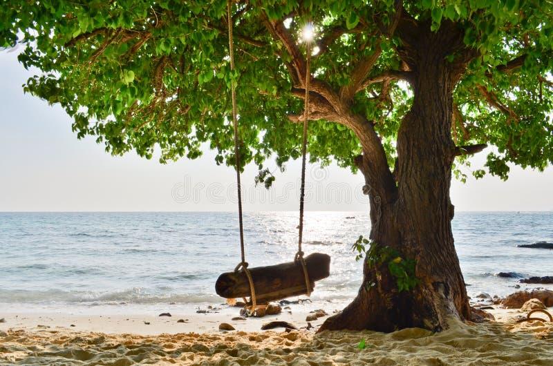 Mar e árvore imagens de stock