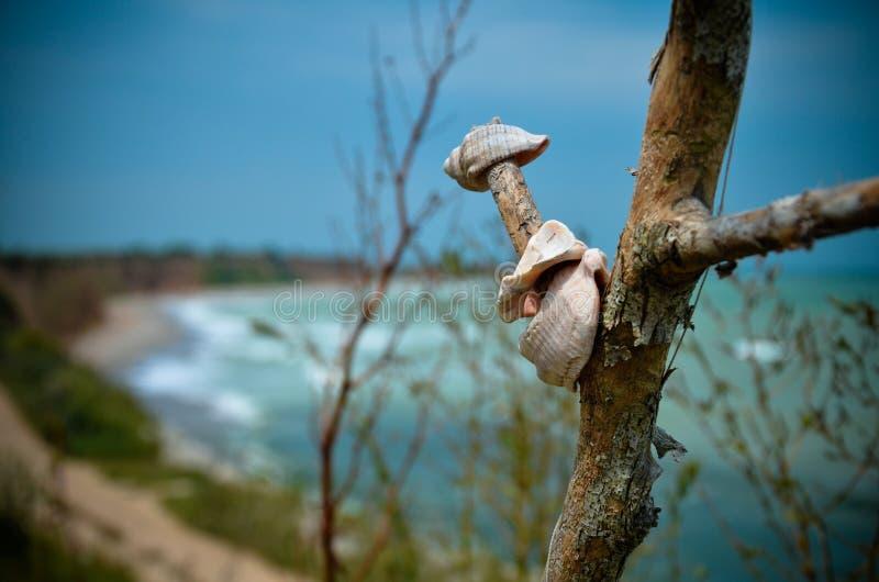 Mar macro de Bulgaria de la playa de Shabla del panorama de Shell imágenes de archivo libres de regalías