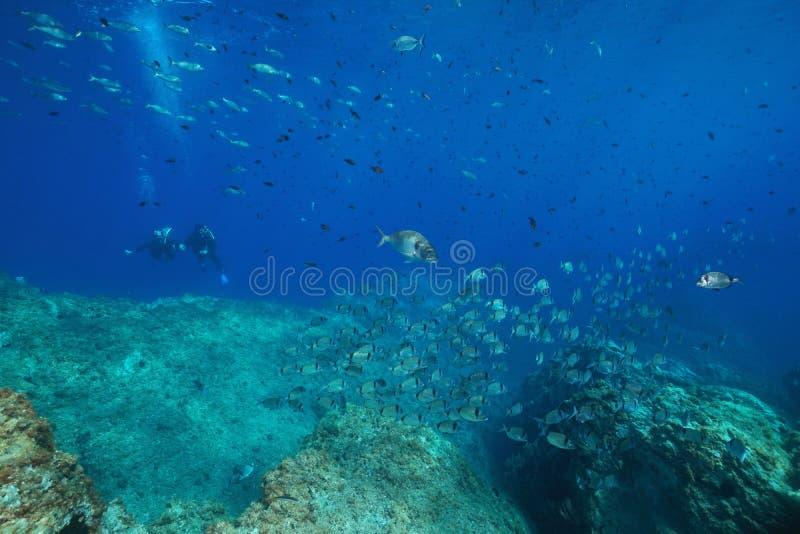 Mar Mediterrâneo subaquático dos peixes com mergulhador de mergulhador fotografia de stock