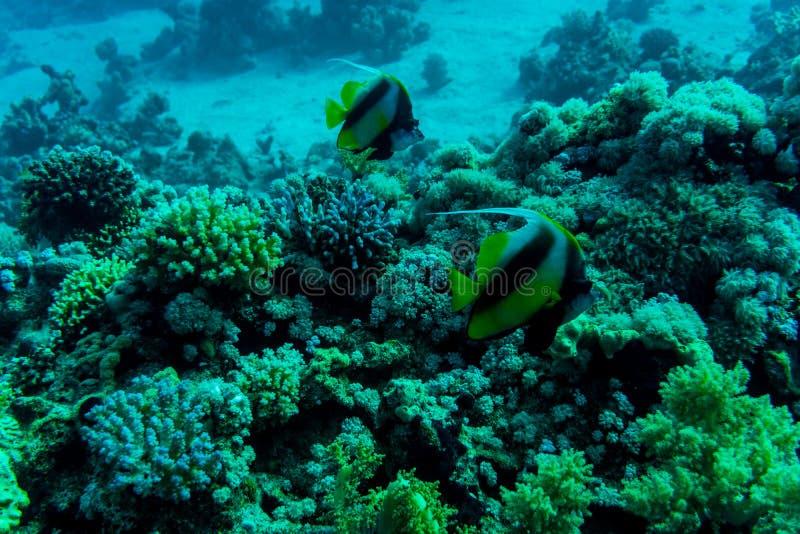 Mar profundamente u océano subacuático con el arrecife de coral como fondo imagenes de archivo