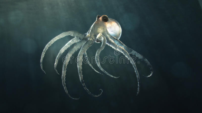 Mar profundo octopod