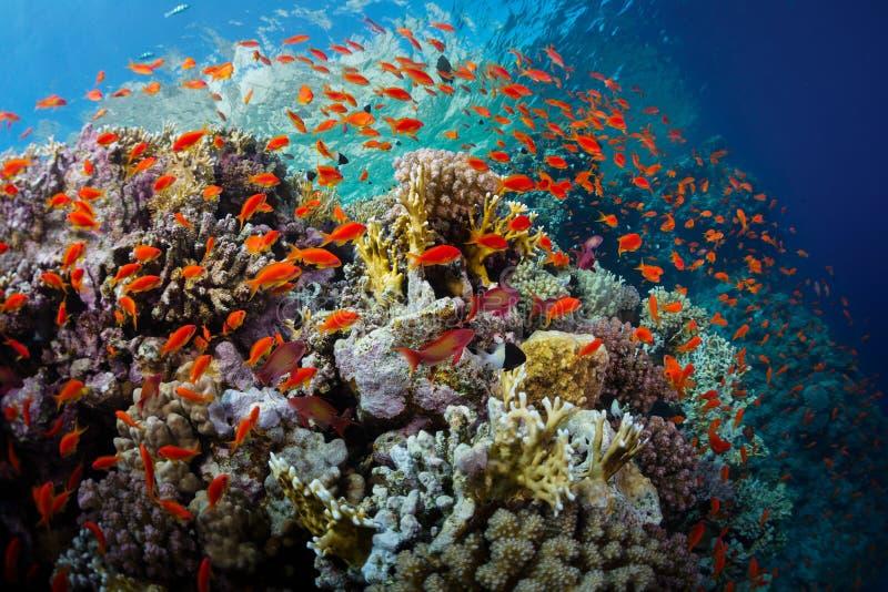 Mar Rojo foto de archivo