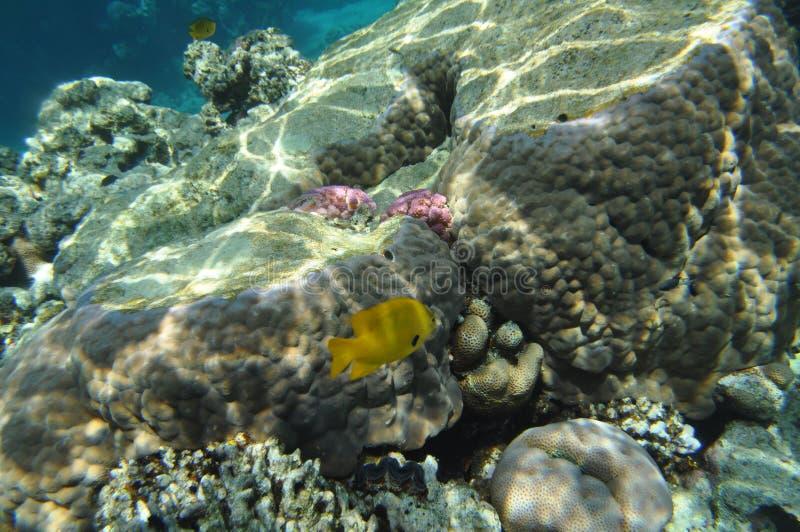 Mar Rojo -4 fotografía de archivo