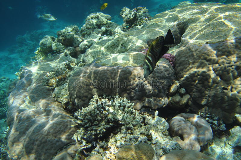 Mar Rojo -2 fotos de archivo libres de regalías