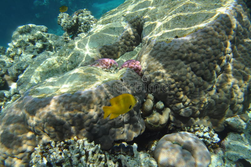 Mar Rosso -4 fotografia stock