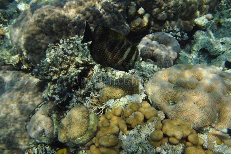 Mar Rosso -3 immagini stock libere da diritti