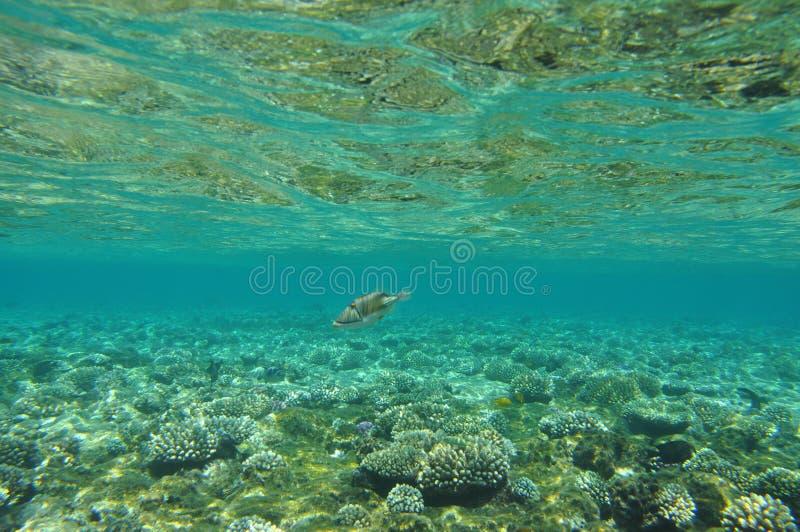 Mar Rosso -1 fotografie stock libere da diritti