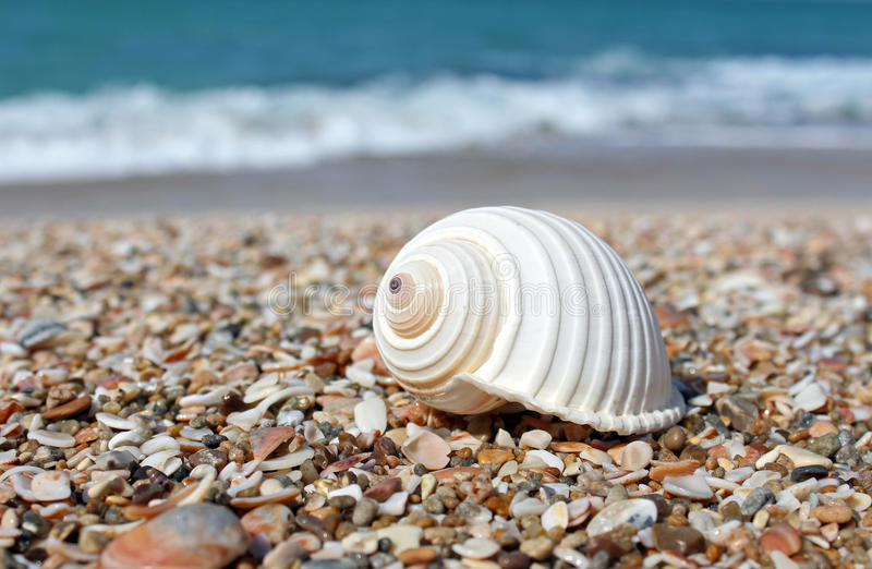 Mar Shell imagenes de archivo