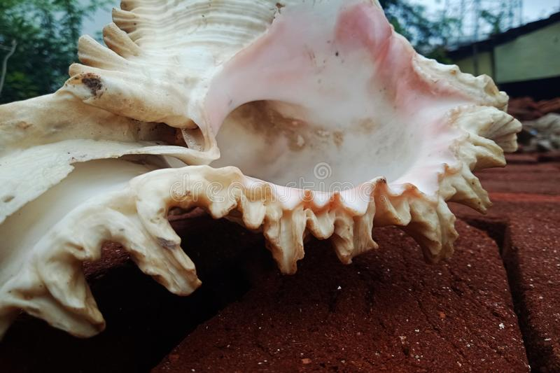 Mar Shell cerca para arriba en el ladrillo Fondo, papel pintado imagen de archivo libre de regalías