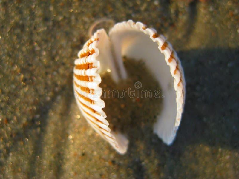 Mar Shell en la playa imagenes de archivo