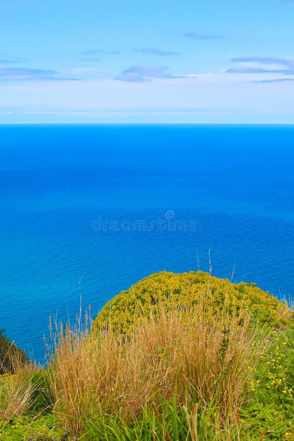 Mar tirreno azul marino hermoso capturado en una imagen vertical con la hierba verde y las plantas amarillas de las colinas sobre fotos de archivo libres de regalías