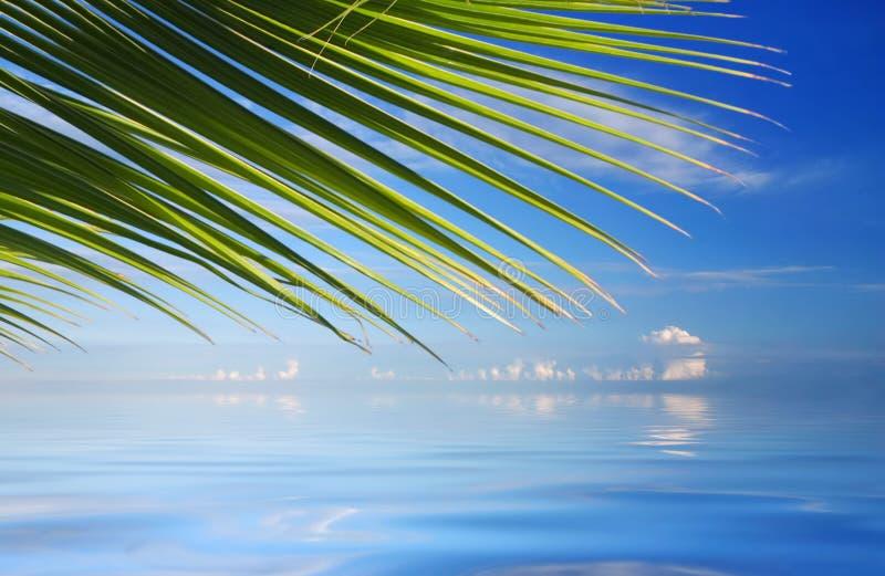 Mar tropical com palmeiras foto de stock
