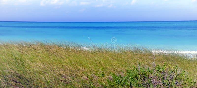 Mar tropical e grama verde imagem de stock