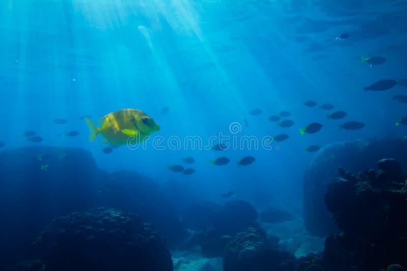 Mar tropical subaquático fotos de stock royalty free