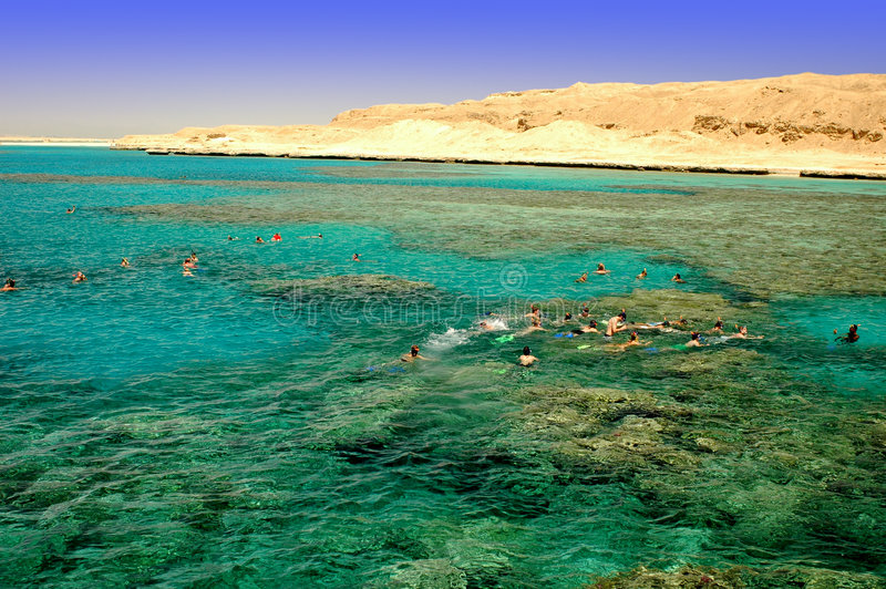 Mar Vermelho que snorkeling foto de stock royalty free