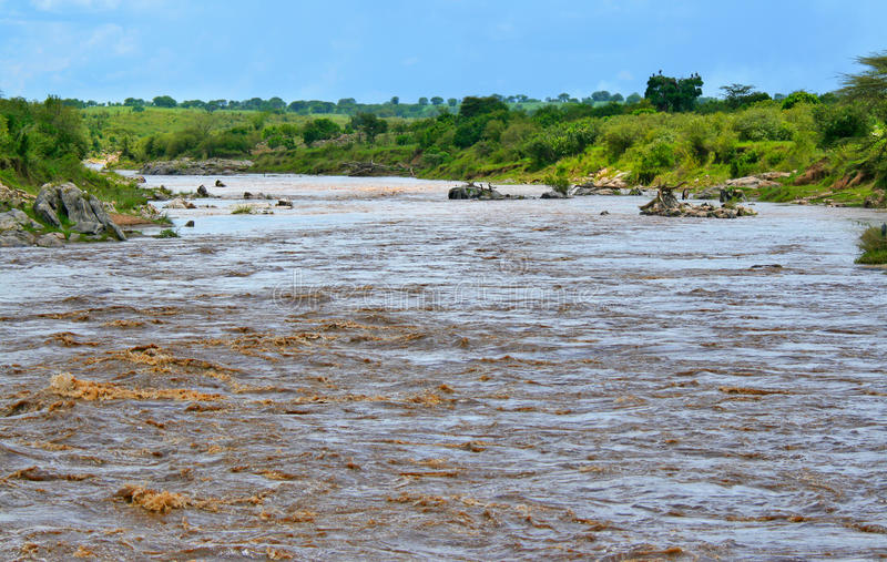 mara河 库存图片