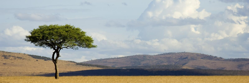 mara马塞语 免版税图库摄影