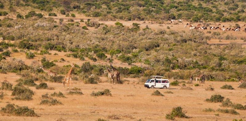 mara φορτηγό τουριστών masai στοκ εικόνες με δικαίωμα ελεύθερης χρήσης