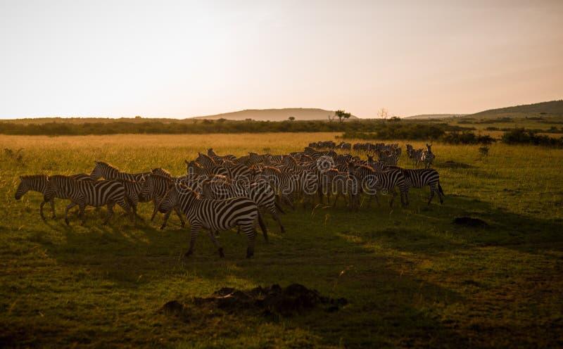 mara masai arkivfoto