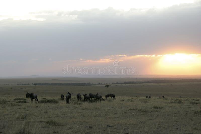 mara masai στοκ φωτογραφίες