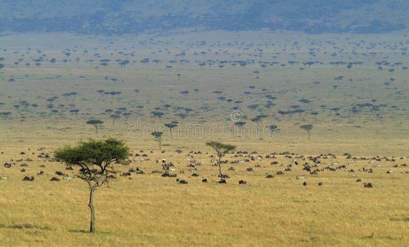 mara masai zdjęcia stock