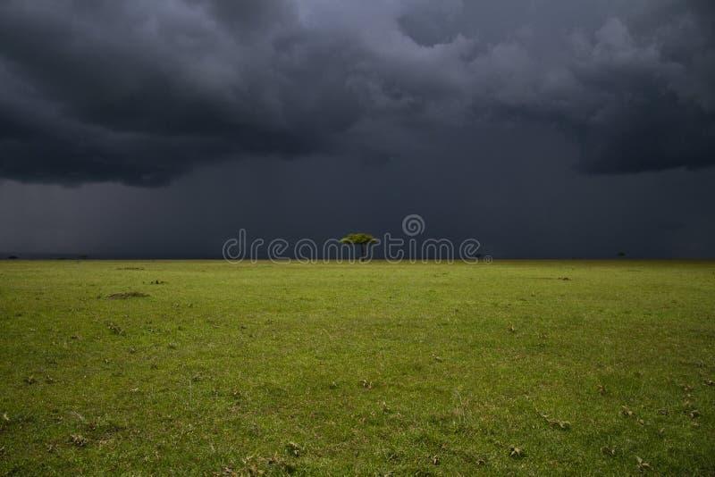 mara masai równina zdjęcia stock