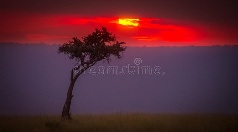 A Mara Sunset. This was shot on an old Sony DSLR at high ISO, but, you can not underestimate getting any sort of picture with this magical sunset. The Maasai royalty free stock images