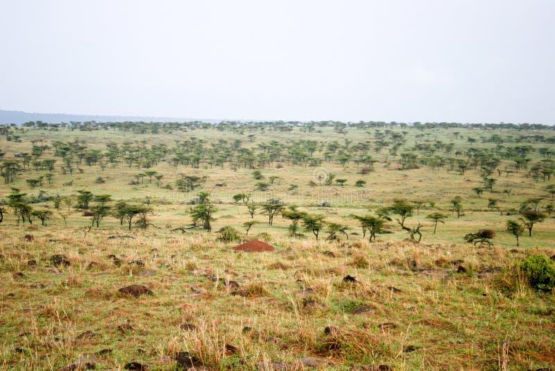 Mara van Masai reserve stock afbeeldingen