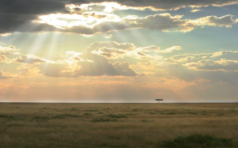 Mara van Masai zonsondergang stock foto's