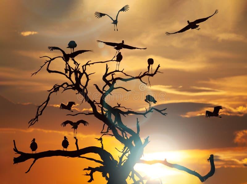 Marabou bocian w zachodzie słońca fotografia stock