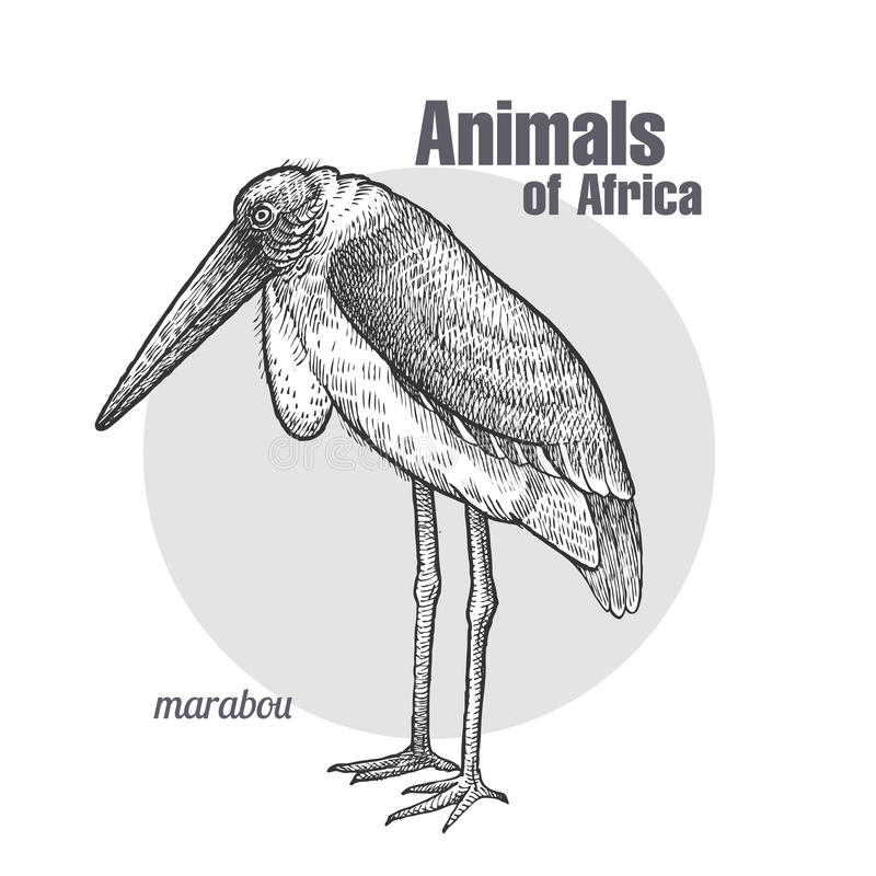 Marabout africain d'oiseau illustration de vecteur