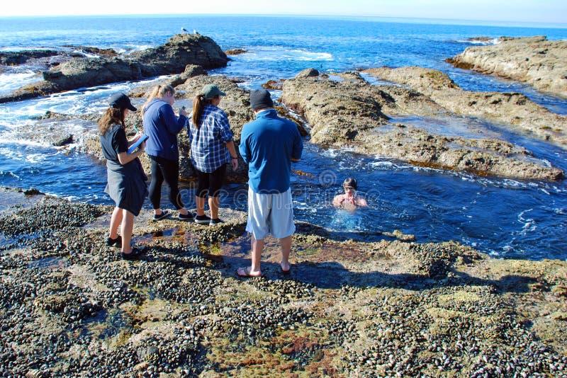 Maraine ekolog studiuje morskiego życie blisko półksiężyc zatoki, laguna beach, Kalifornia zdjęcia royalty free