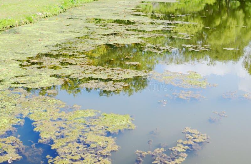 Download Marais image stock. Image du flore, normal, environnement - 45361819