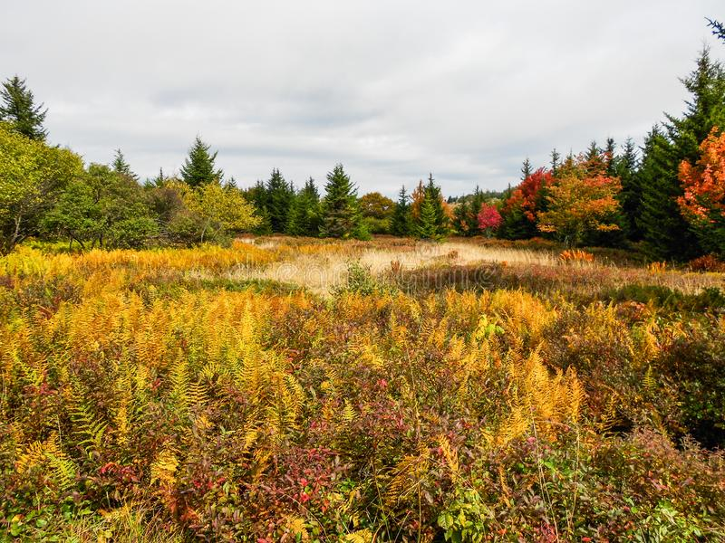 Marais alpin Dolly Sods, la Virginie Occidentale U S a En automne photo libre de droits