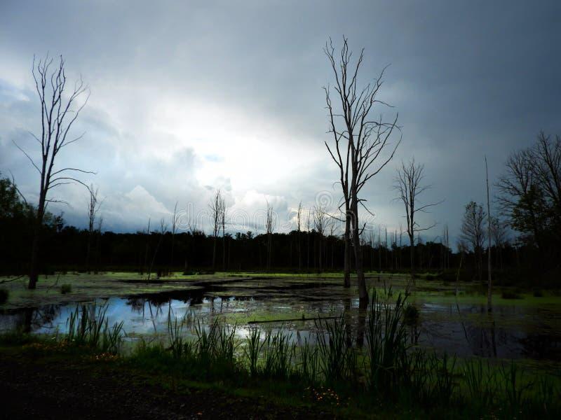 Marais au crépuscule pendant une tempête de pluie photo stock