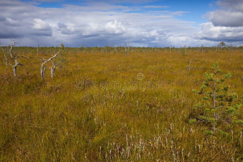 Download Marais Augmenté Avec Les Pins Rares Image stock - Image du nature, saisonnier: 45352547