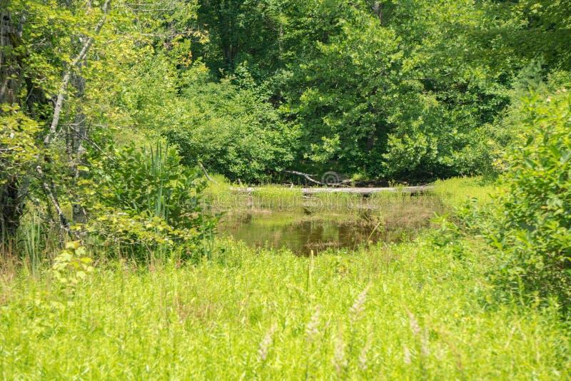 Marais caché de la faune dans le comté de Craig, Virginie, États-Unis photographie stock libre de droits