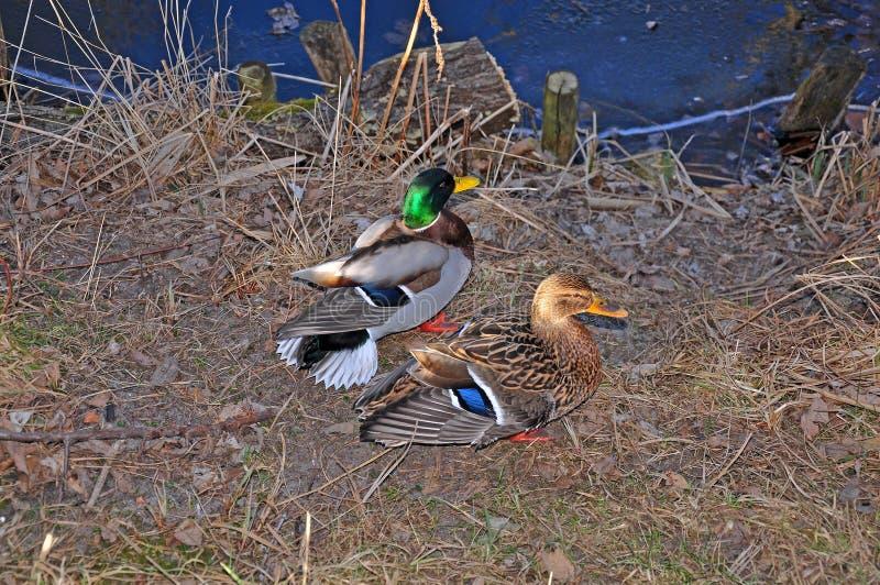 Marais, canaux et lacs photo libre de droits