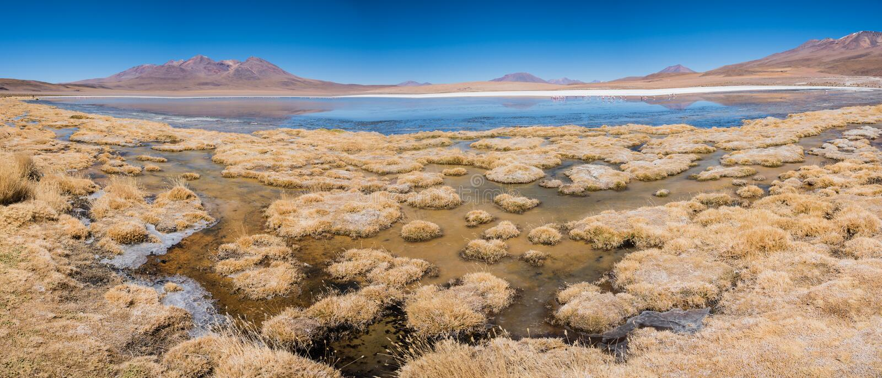 Marais d'Altiplano image stock