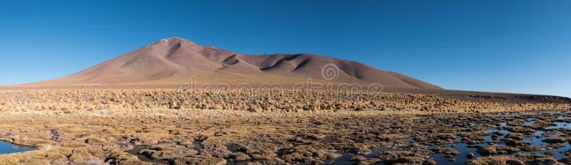 Download Marais d'Altiplano image stock. Image du scène, horizontal - 87707545