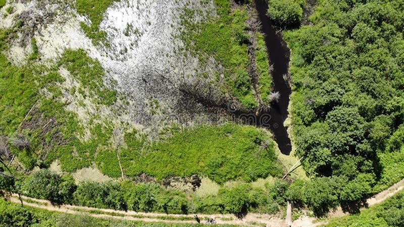 Marais dans la vue de forêt du bourdon horizontal mar3cageux Vue d'un marais infranchissable d'une taille Forêt sauvage l de phot photographie stock libre de droits