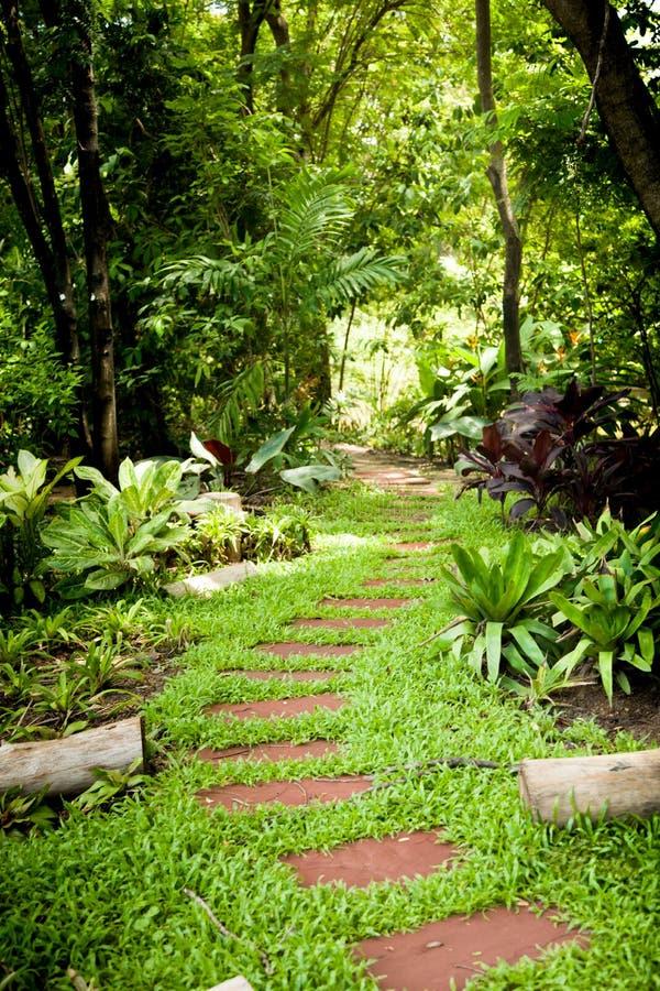 Marais dans le jardin image stock