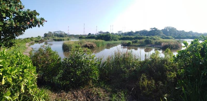 Marais de Kranji, Singapour photos libres de droits