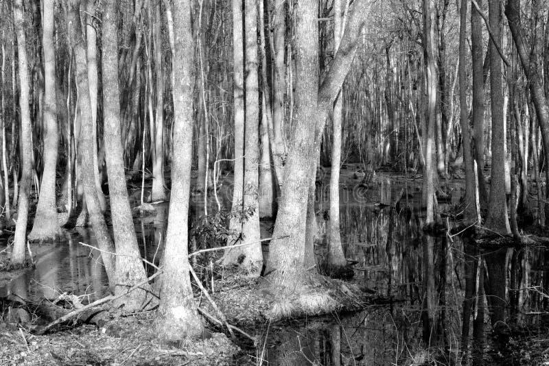 Marais de la Caroline du Sud images stock