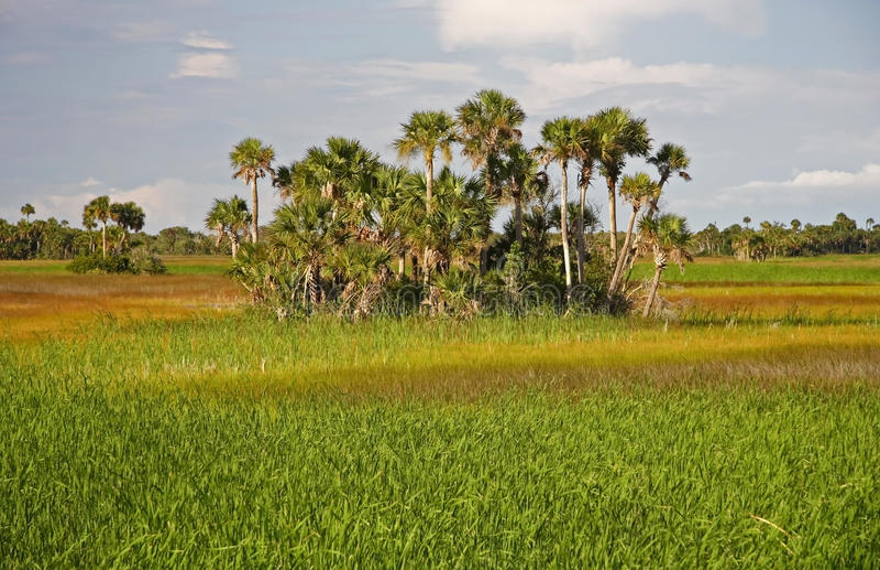 Marais de la Floride image stock