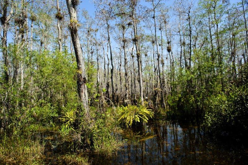 Marais de la Floride image libre de droits
