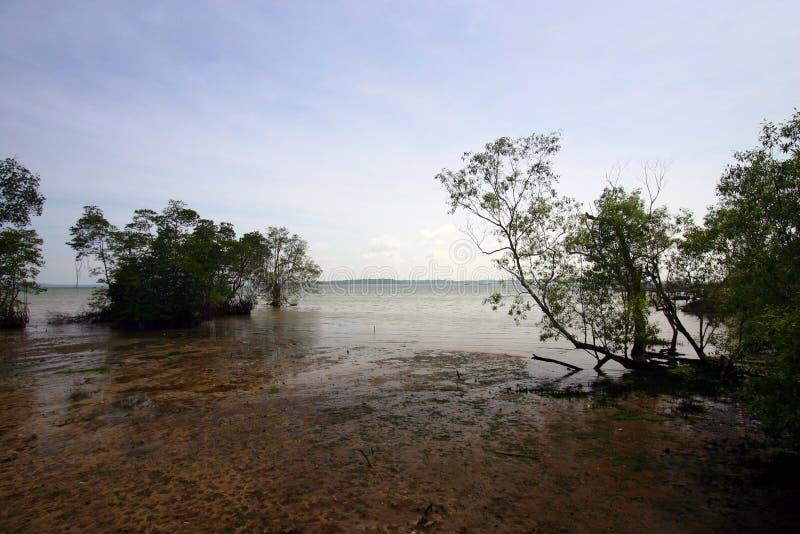 Marais de palétuvier, tropical photo stock