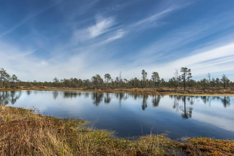 Marais de tourbe, Estonie images libres de droits