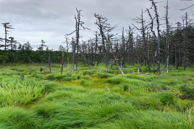 Marais du nord et forêt impeccable s'élevant autour images libres de droits